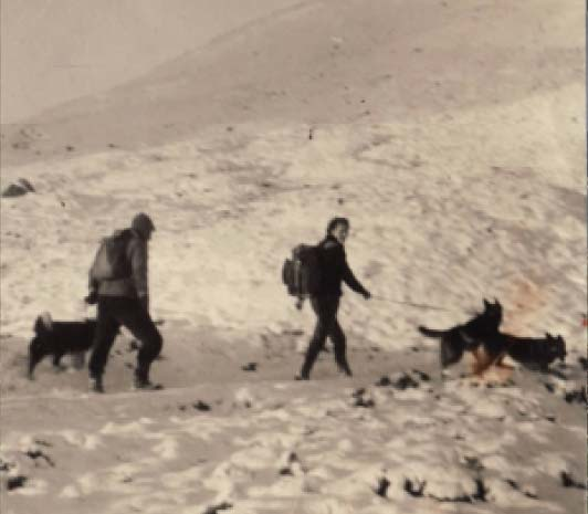 Search dogs history image