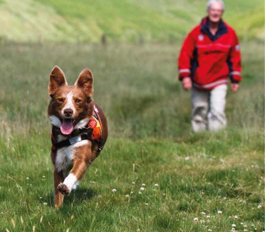 Search Dog Training Picture